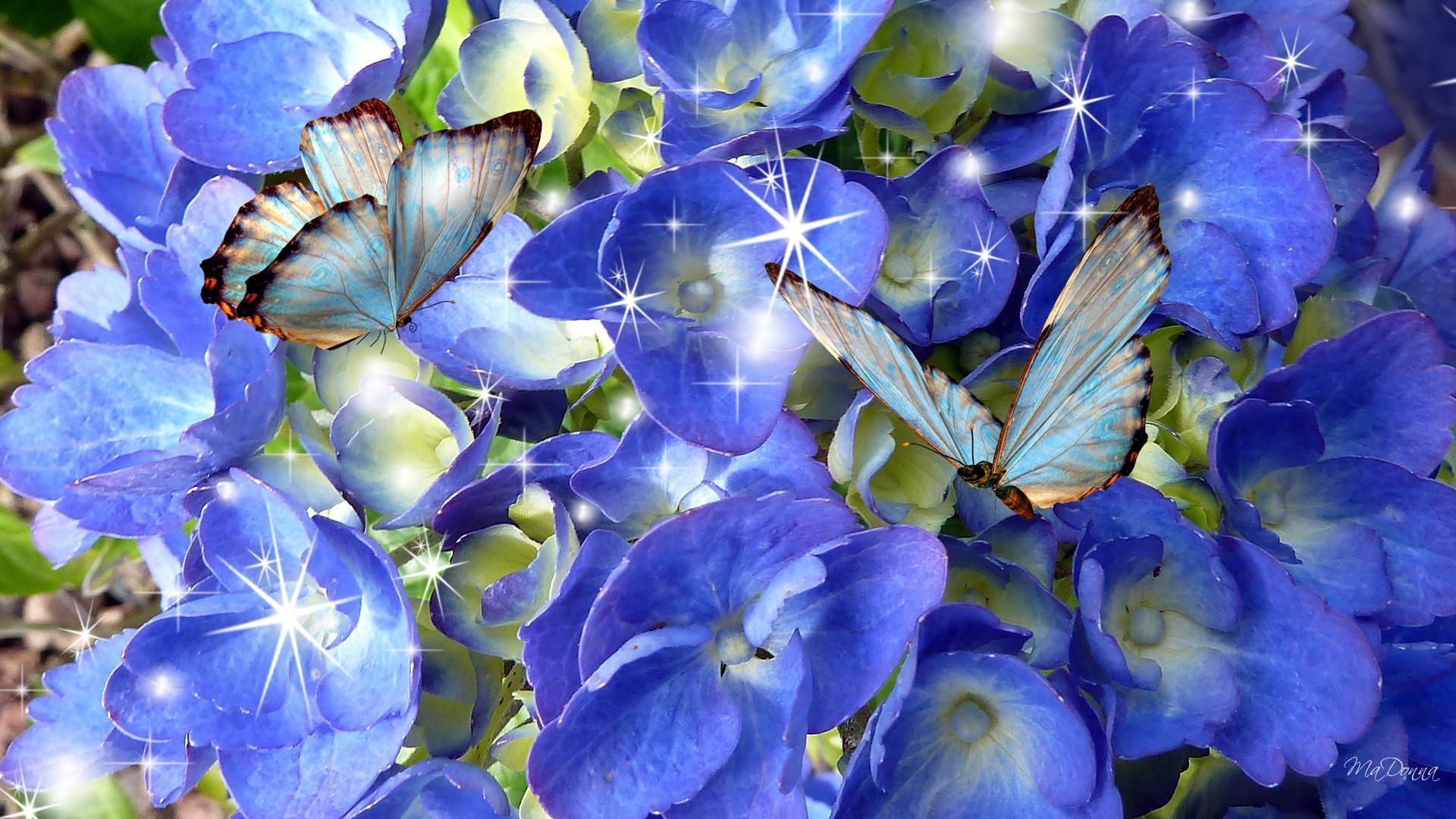 3d Rose Wallpaper Apps Azul Hort 234 Nsia Azul Borboletas Hd Papel De Parede