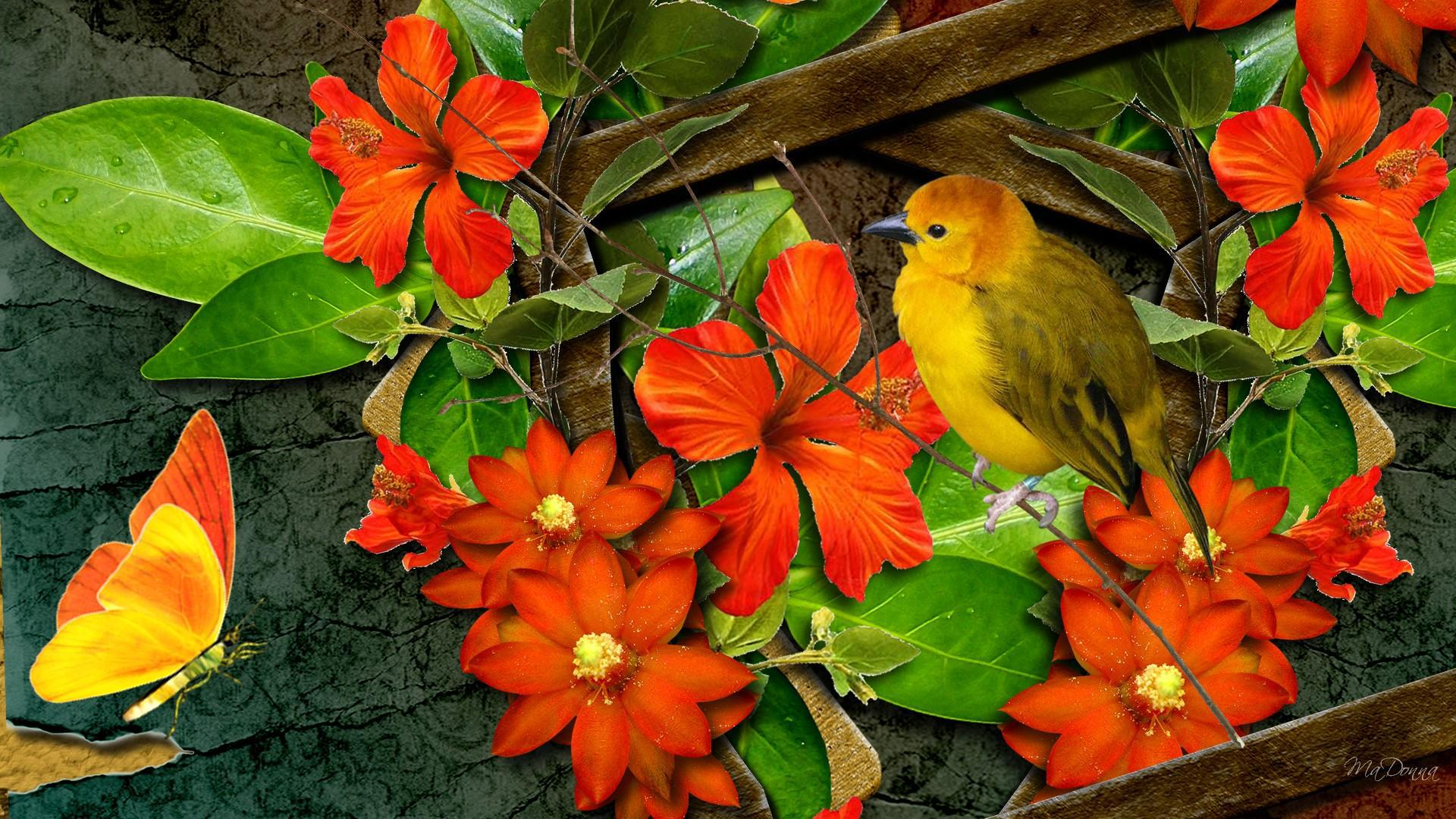 Beautiful Pictures Of Flowers And Butterflies Birds Bright Flowers Bird Butterfly Hd Desktop Wallpaper
