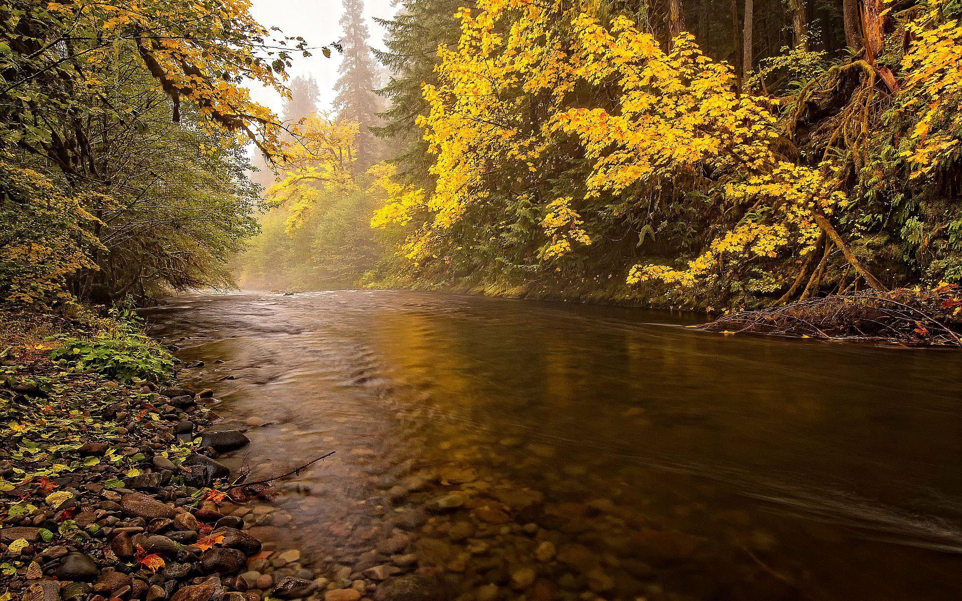 Microsoft Wallpaper Fall Calm Flowing River In The Forest Hd Desktop Wallpaper