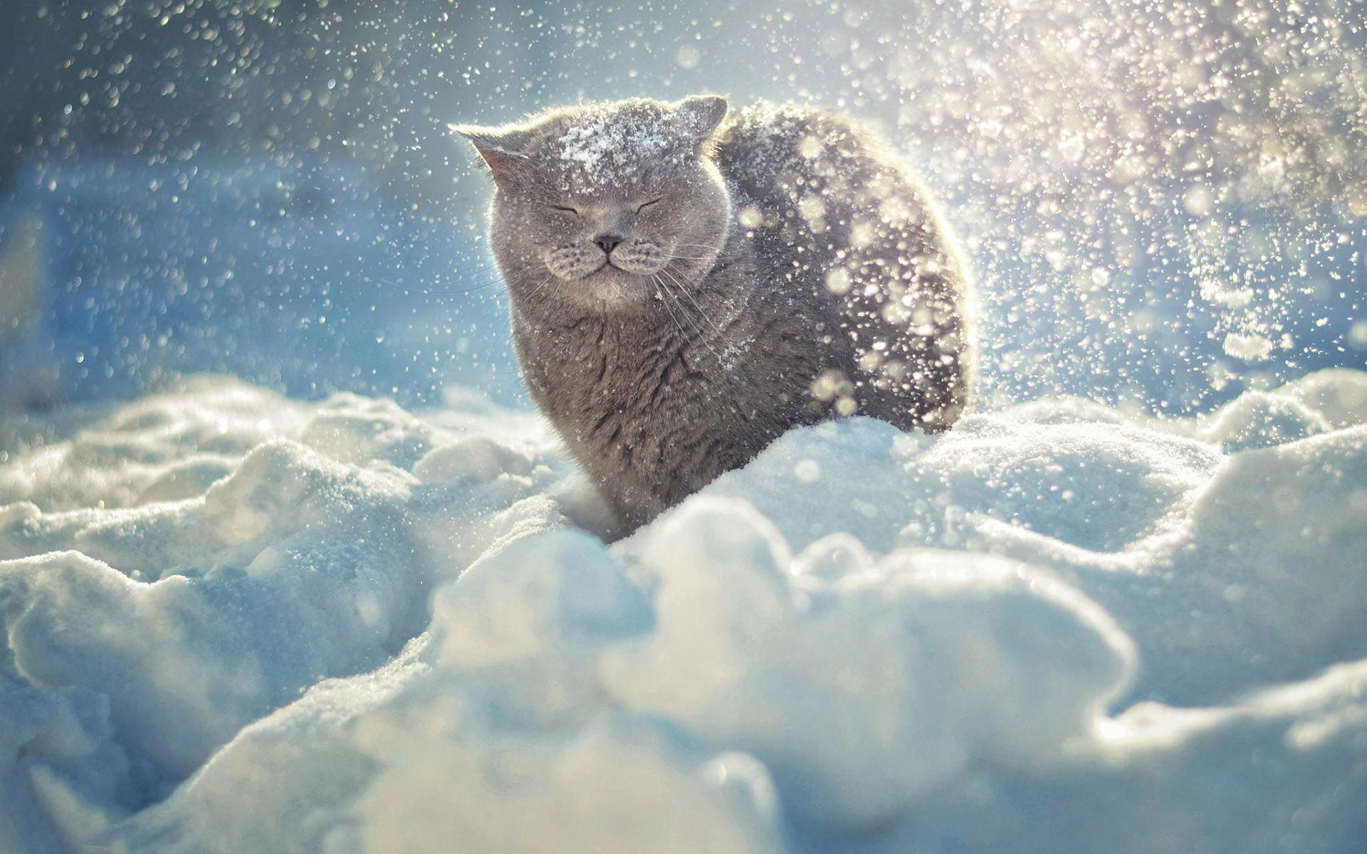 Cute Animals Playing Soccer Wallpaper ワイドスクリーン::高精細:雪のhdデスクトップの壁紙を楽しんで猫フルスクリーン