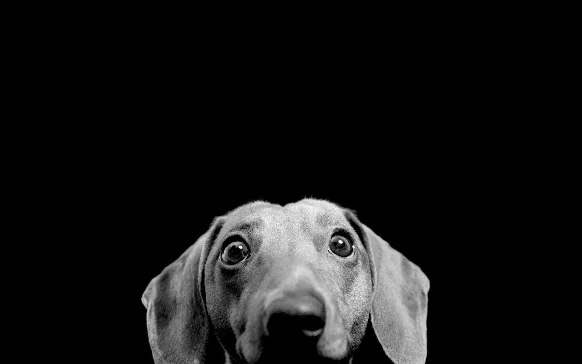Desktop Wallpaper Hd 3d Full Screen Baby Cute Peeking Dog Hd Desktop Wallpaper Widescreen High