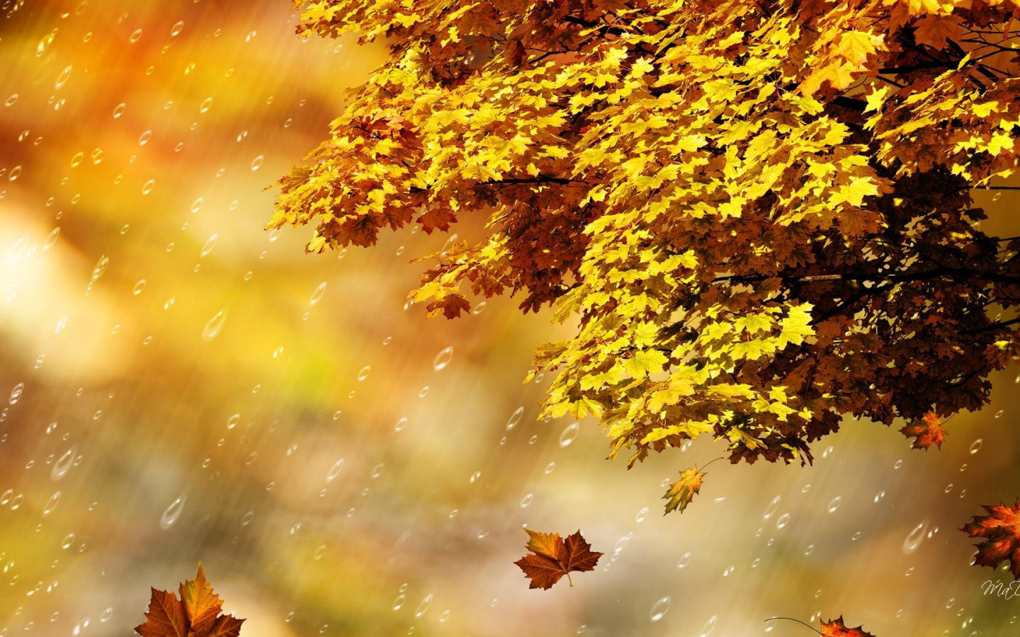 Computer Desktop Hd Wallpapers Fall Fall Rain Shower Hd Desktop Wallpaper Widescreen High
