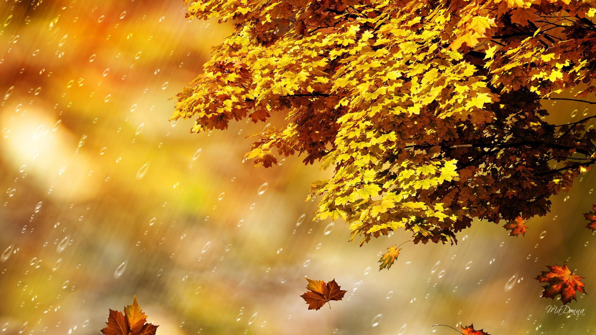 Rainy Season Wallpapers With Quotes Hd Fall Rain Shower Hd Desktop Wallpaper Widescreen High