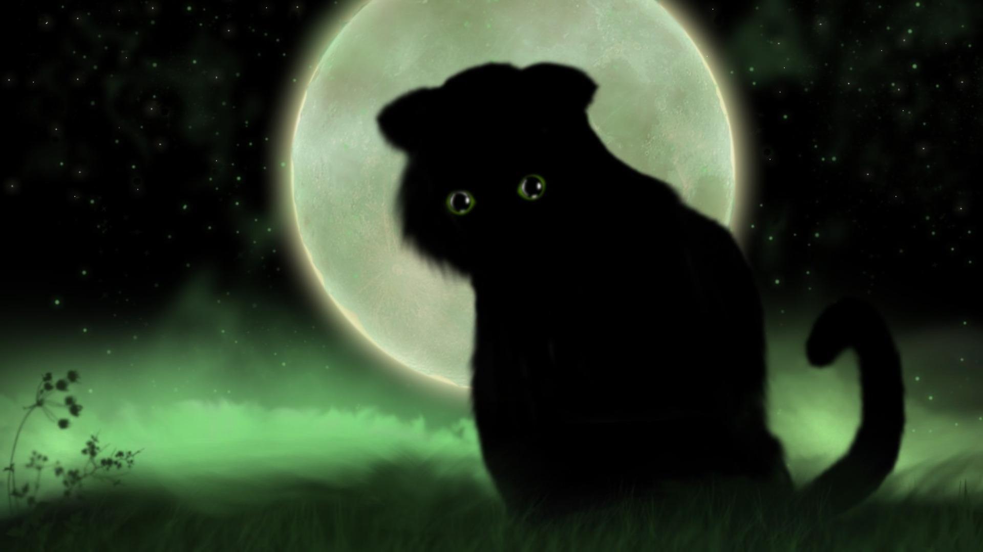 Cute Kitty Cat Wallpapers Fantasy Cat Hd Desktop Wallpaper Widescreen High
