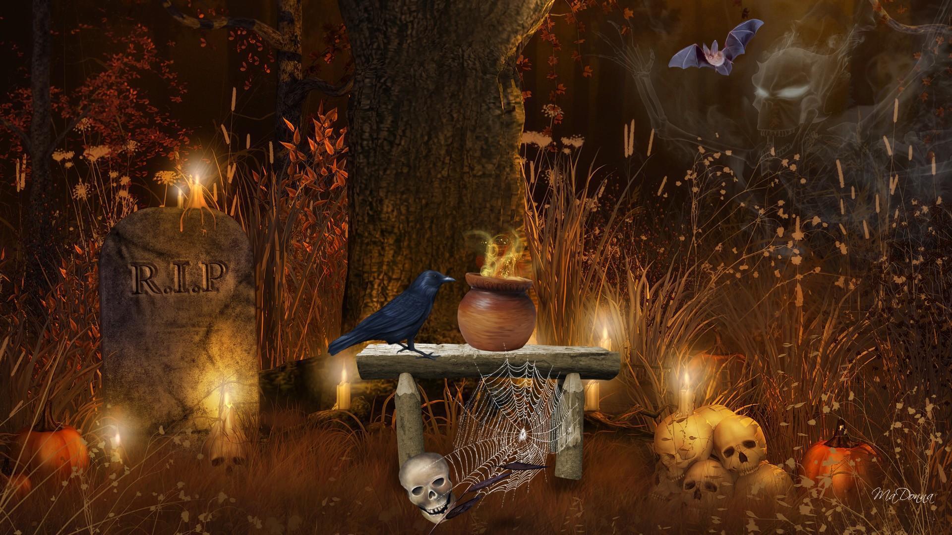 Fall White Pumpkins Wallpaper Halloween Spirits Hd Desktop Wallpaper Widescreen High