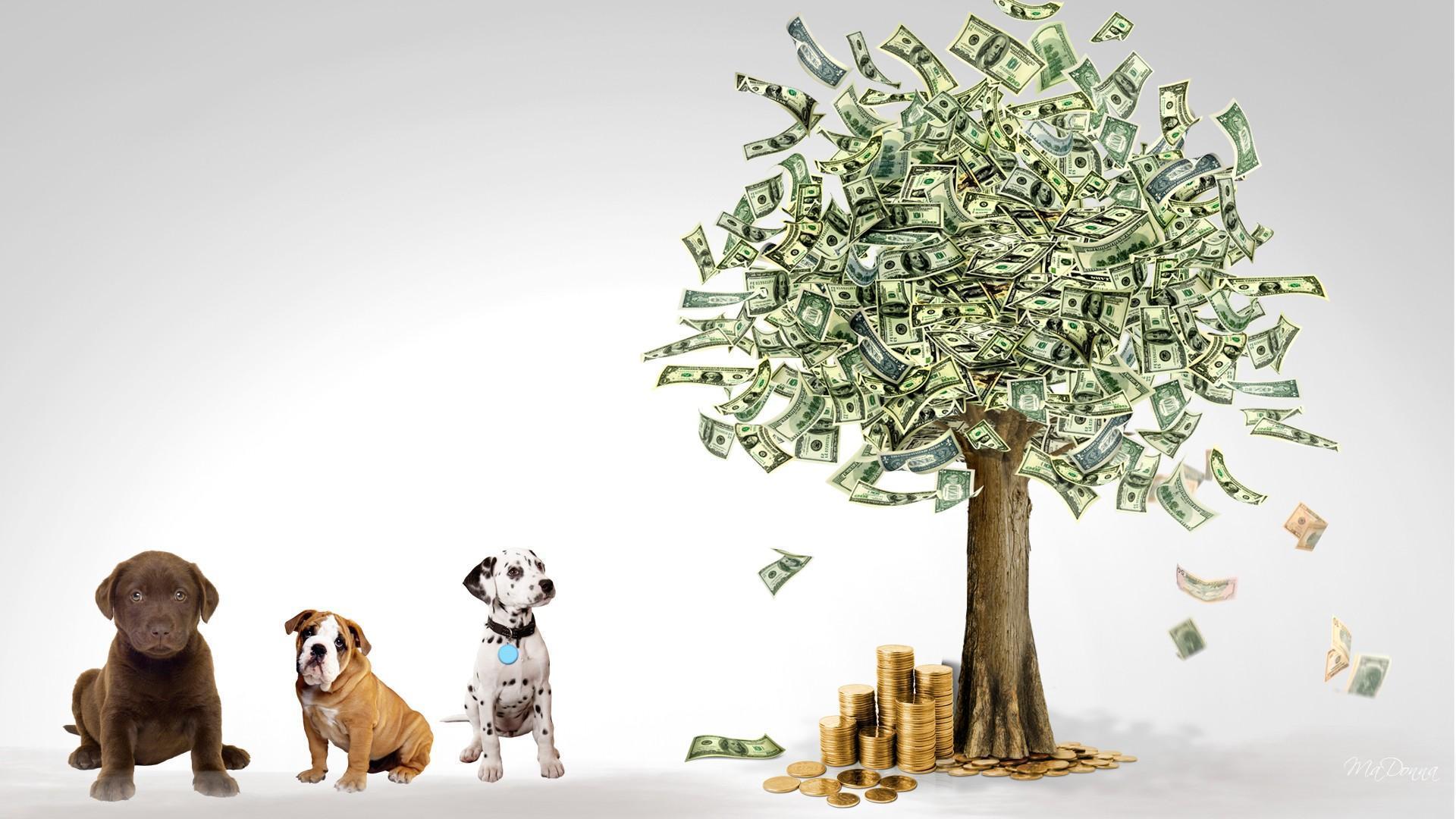 3d Stereoscopic Mural Wallpaper Money Tree Wallpaper Www Pixshark Com Images Galleries