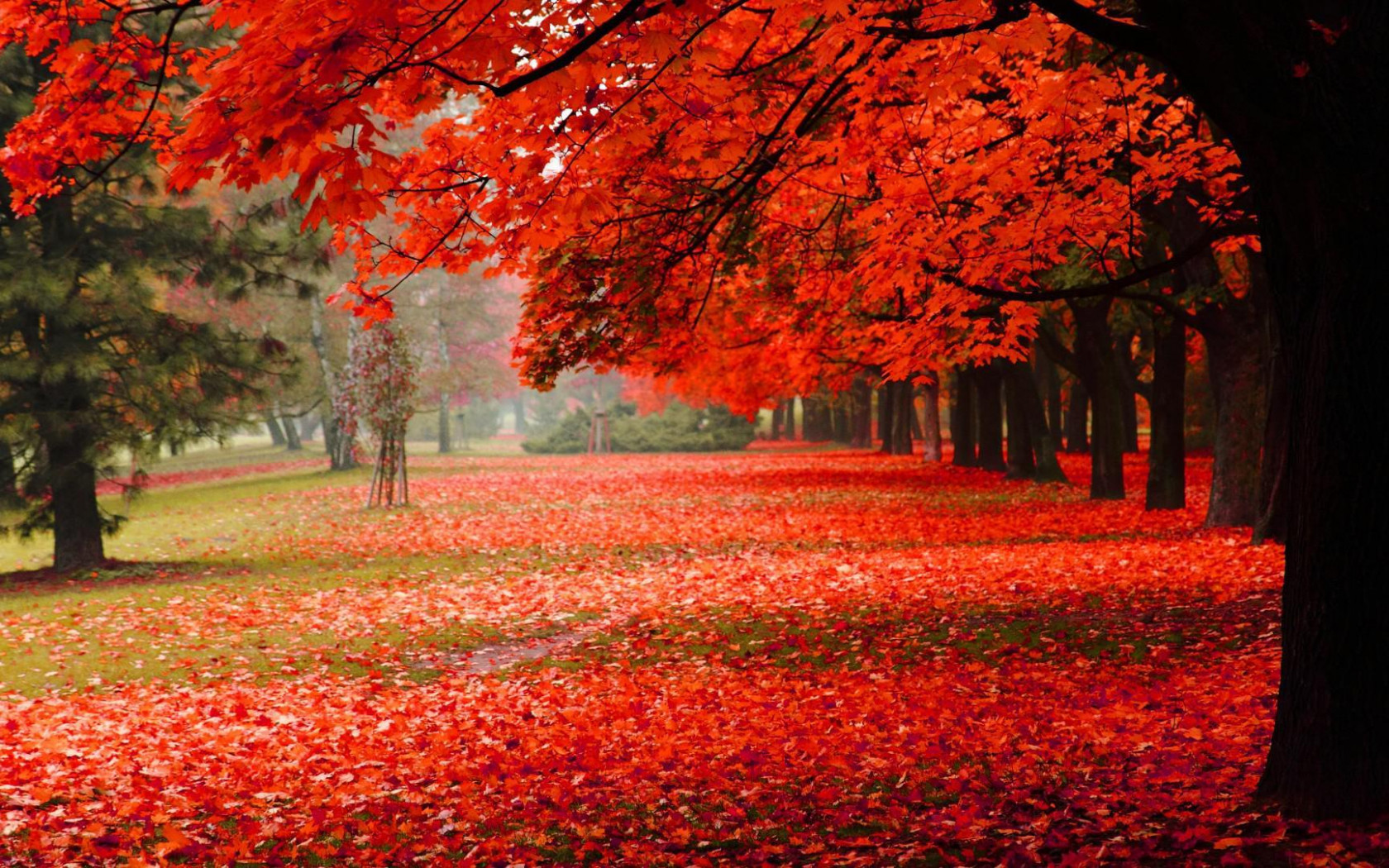 Fall Heart Leaves Background Wallpaper Wallpaper Natural Park Autumn Red Leaves Autumn