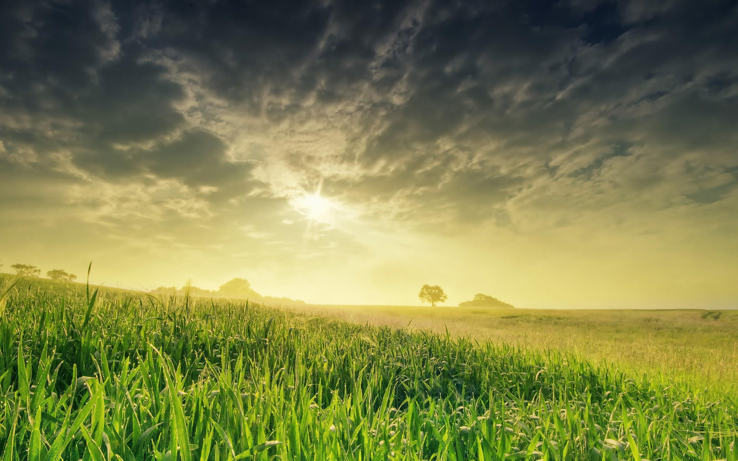 Best 3d Animated Wallpapers For Android Nature Landscape Field Sun Grass Best Hd Desktop Wallpaper