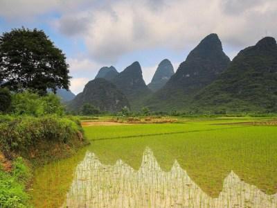 Rice field near the mountains HD desktop wallpaper : Widescreen : High Definition : Fullscreen