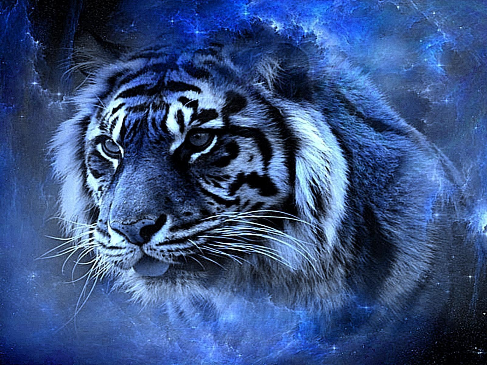 3d Galaxy Wallpaper Desktop Tiger Sch 246 Nheit Hd Desktop Hintergrund Breitbild High