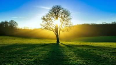 벽지 나무, 태양, 빛, 여름, 숲 HD : 와이드 스크린 : 높은 정의 : 전체 화면