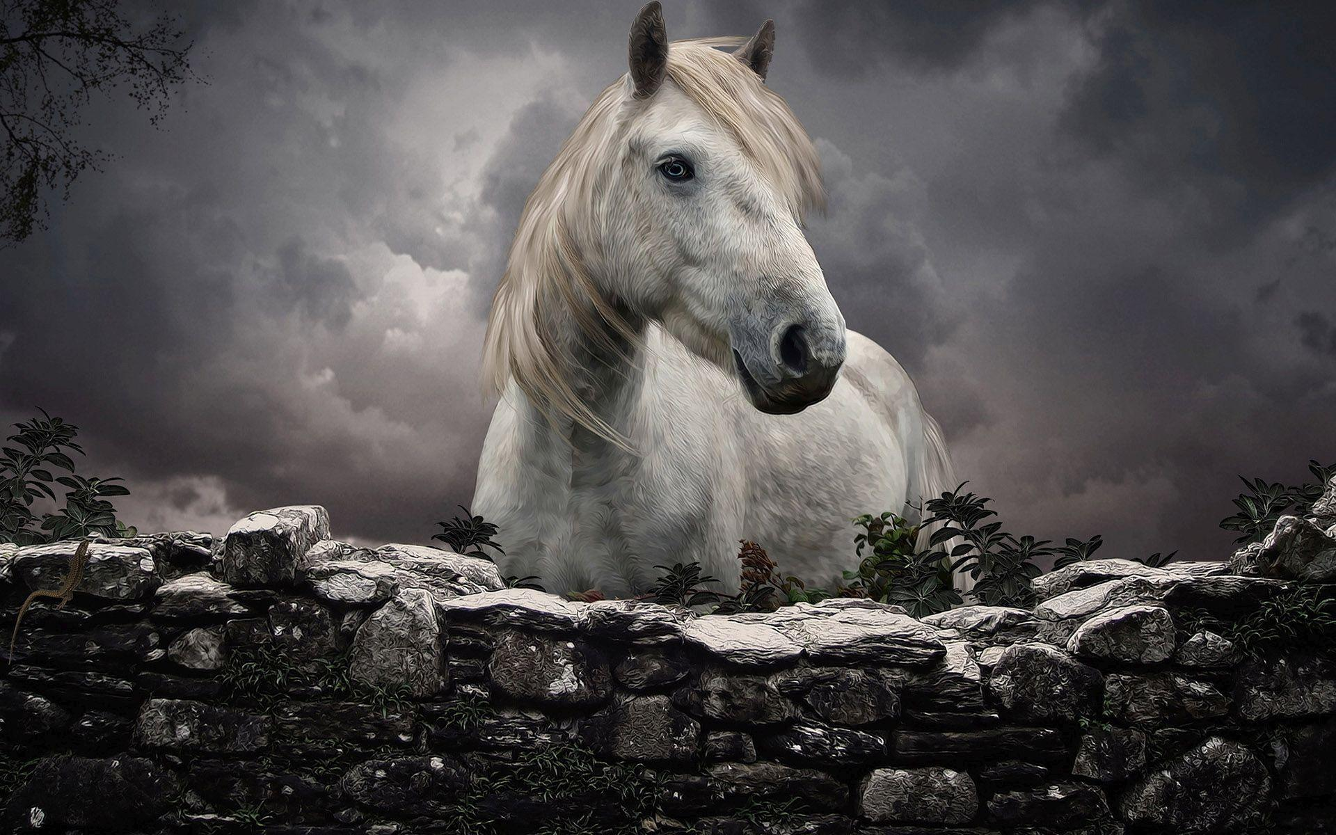Awesome Car Wallpaper Angles White Horse At The Fence Hd Desktop Wallpaper Widescreen