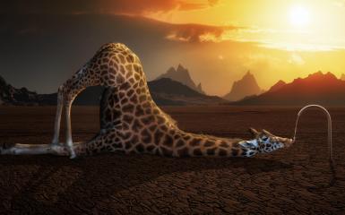 Om 3d Wallpaper Hd Giraffe Fiets Art Grappig Hd Desktop Wallpaper Breedbeeld