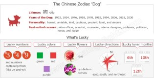 Meaning Of The Year Chinese Zodiac Dog