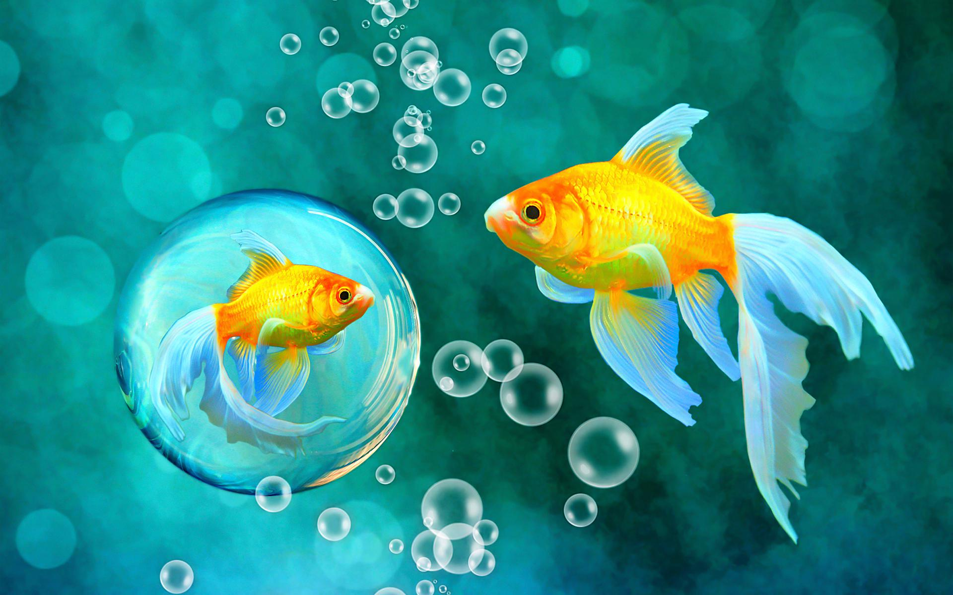 Good Night 3d Moving Wallpaper Hd Bubbles Goldfish Blue Bokeh Sea Fish Fishes Underwater