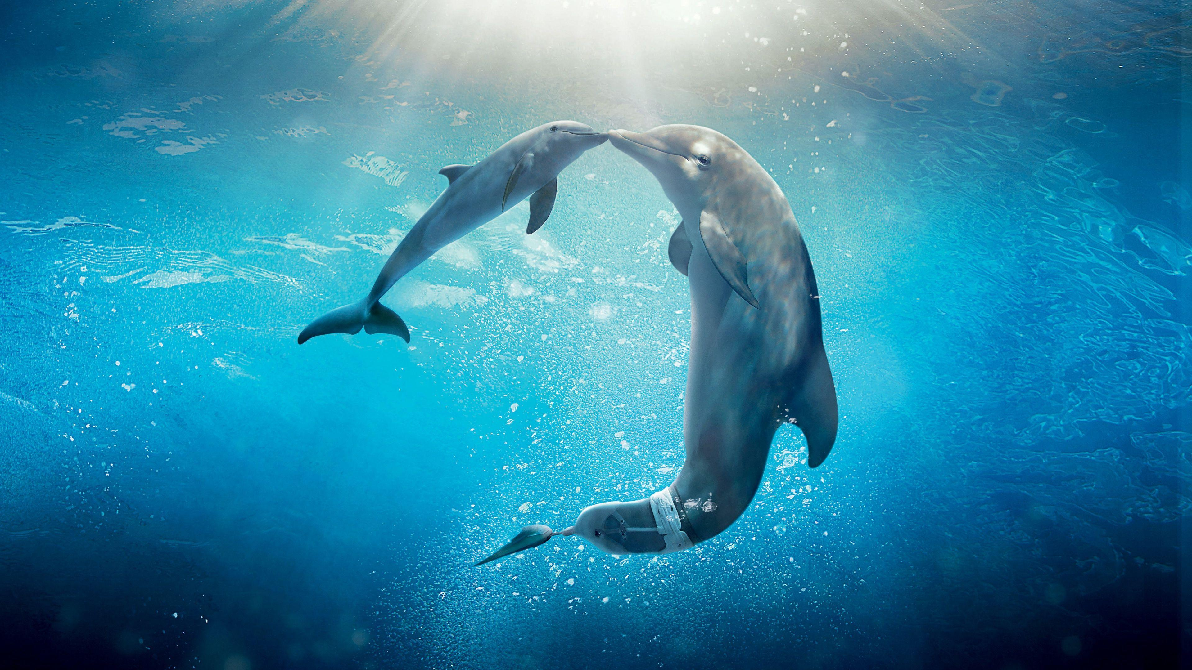 Animated Fish Wallpaper Mobile Hd Dolphin Tale 2 Wallpaper Download Free 147120