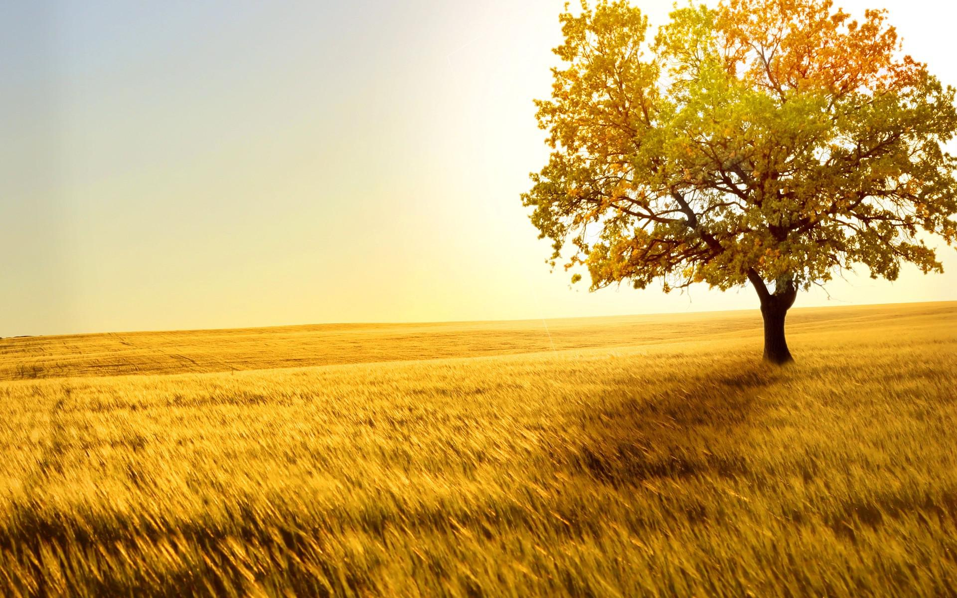 Moving Fall Wallpapers For Windows 10 Hd Fields Grass Trees Autumn Fall Sunlight Leaves