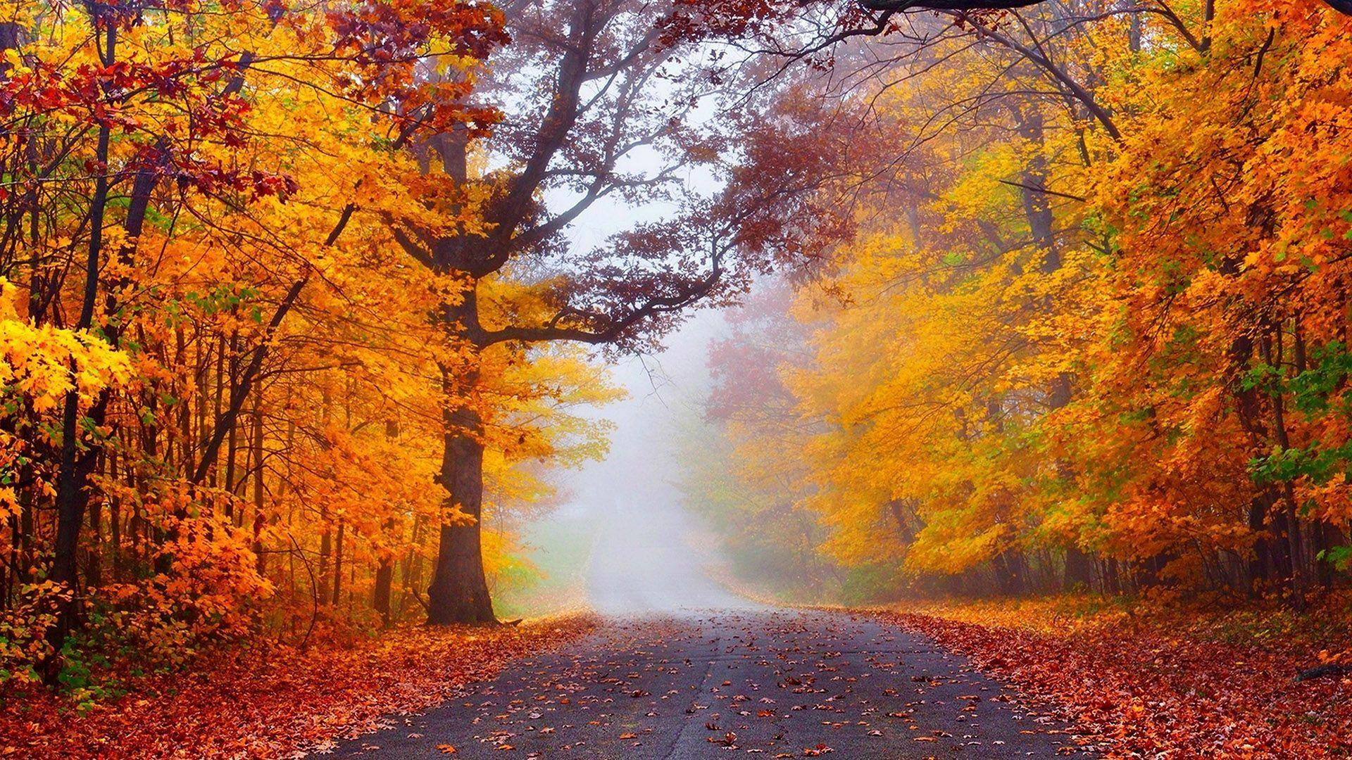 Happy New Year 2016 3d Wallpaper For Pc Hd Fog In The Autumn Forest Wallpaper Download Free 149965