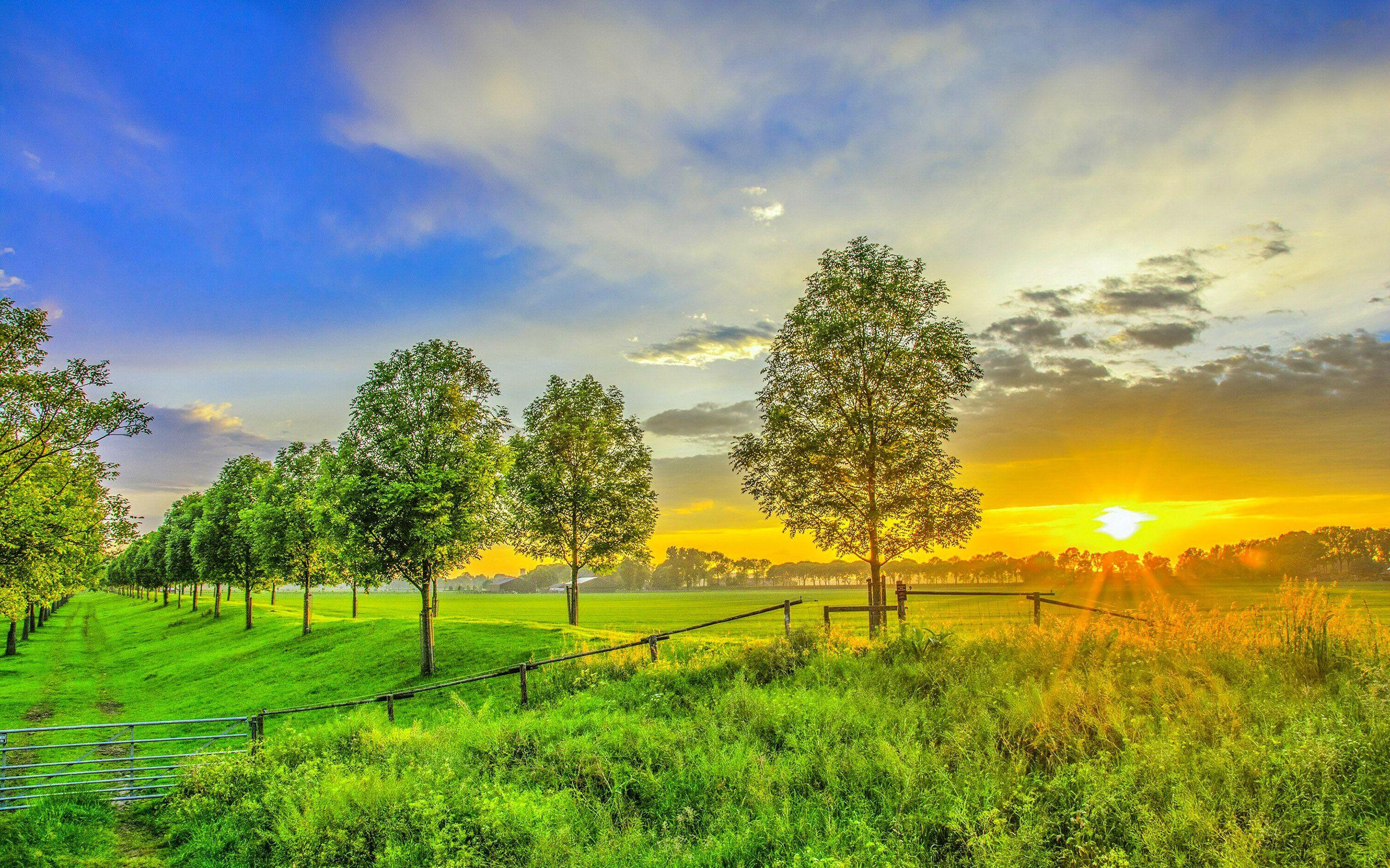 Happy New Year 2016 3d Wallpaper For Pc Hd Golden Sunset On The Green Field Wallpaper Download