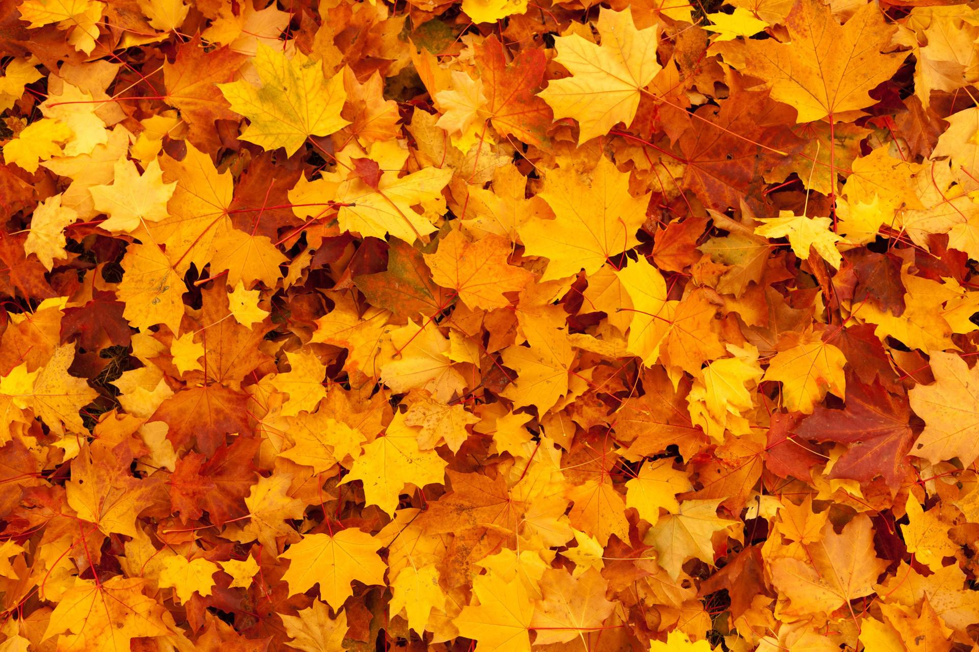 Autumn Leaves Falling Hd Wallpaper Hd Leaves Background Fresh Wallpaper Download Free 140105
