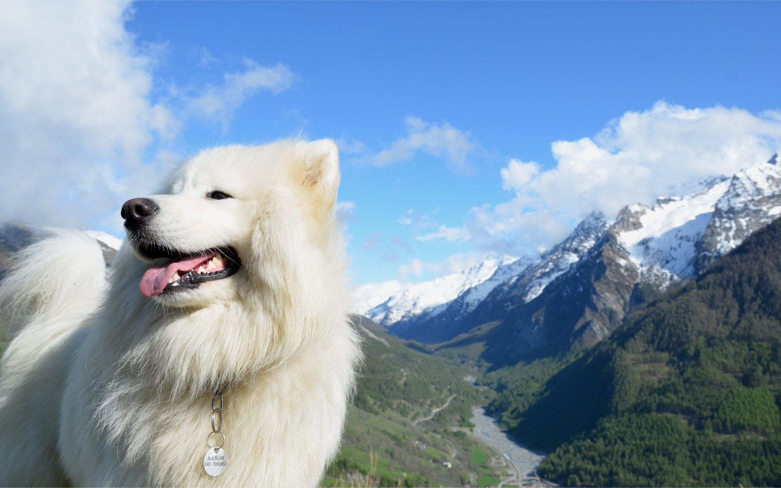 Cute Puppies Wallpaper 1080p Hd Mountains Clouds Landscapes Nature Animals Dogs