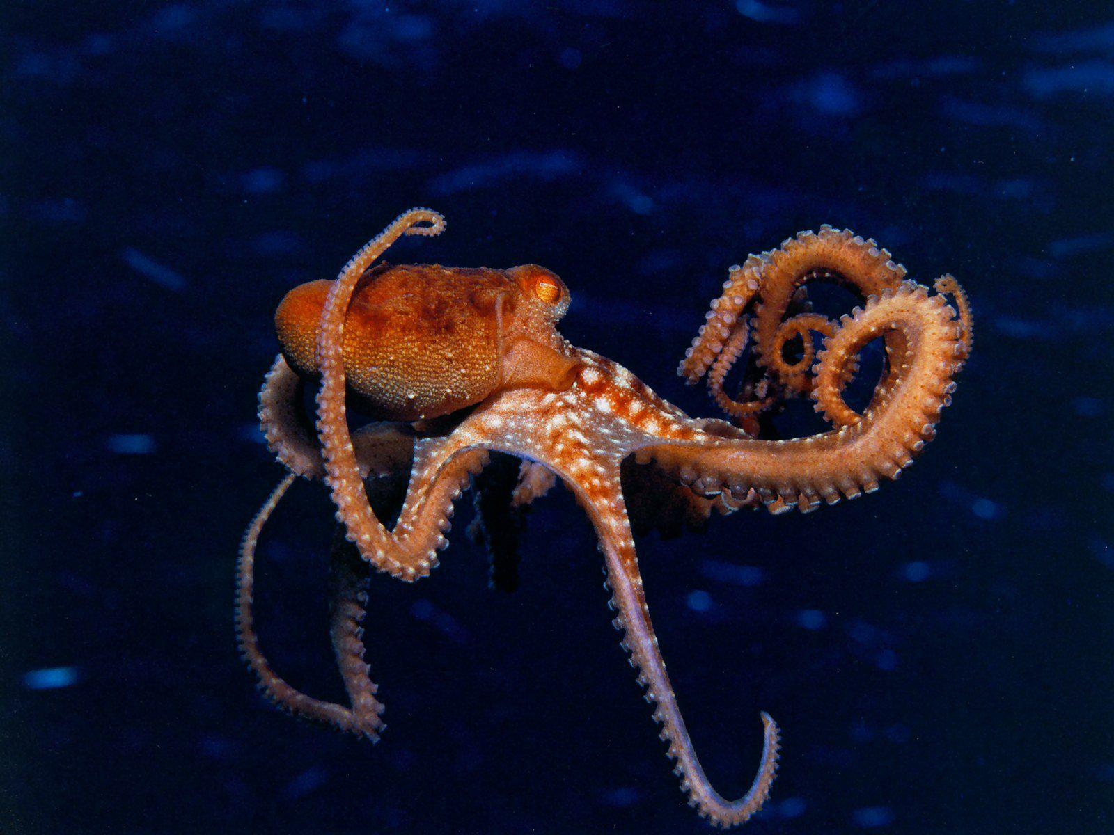 Tropical Ocean 3d Live Wallpaper Hd Octopus Sealife Underwater Ocean Sea Images Wallpaper