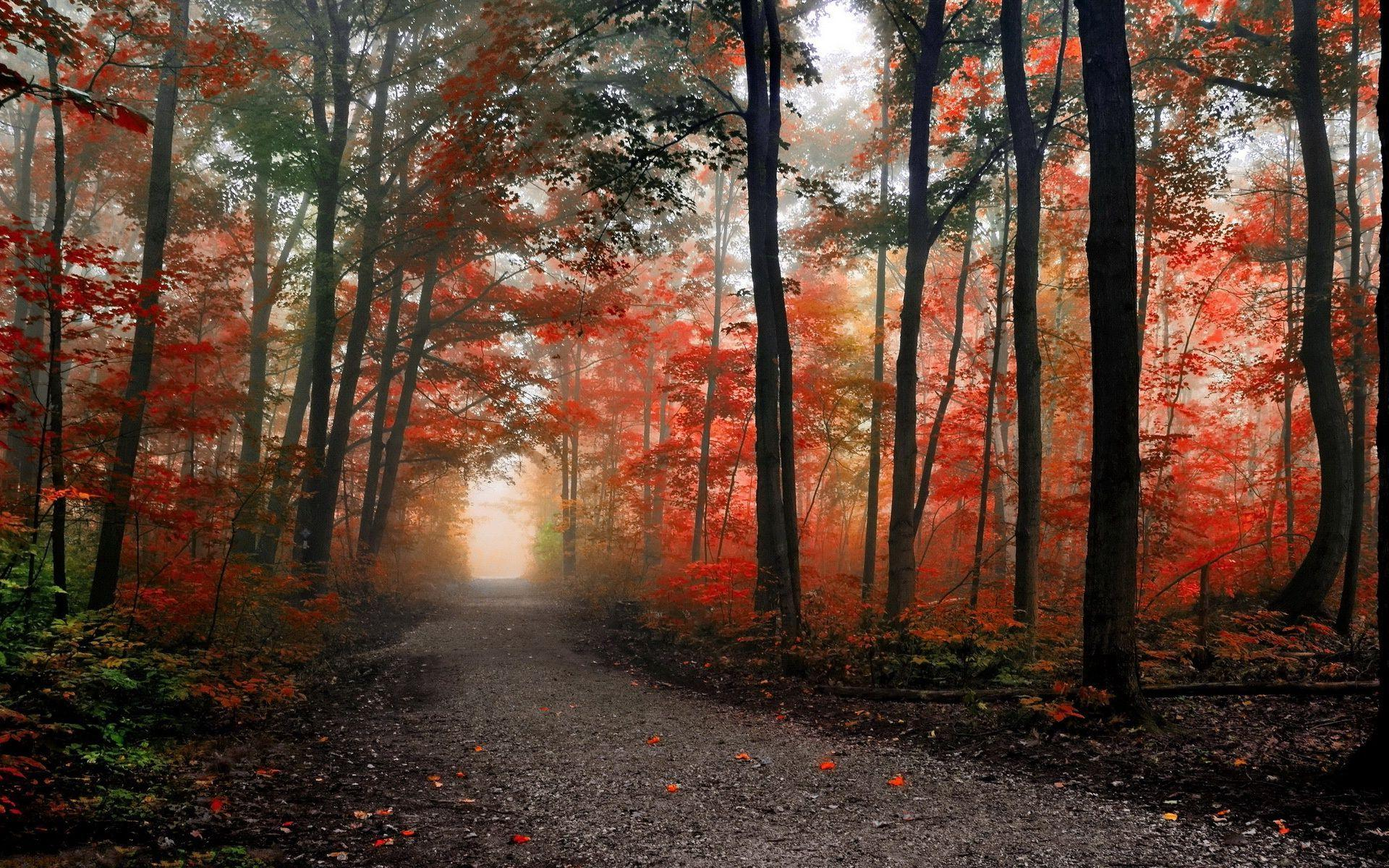 Free Full Screen Fall Wallpaper Hd Path In The Foggy Autumn Forest Wallpaper Download