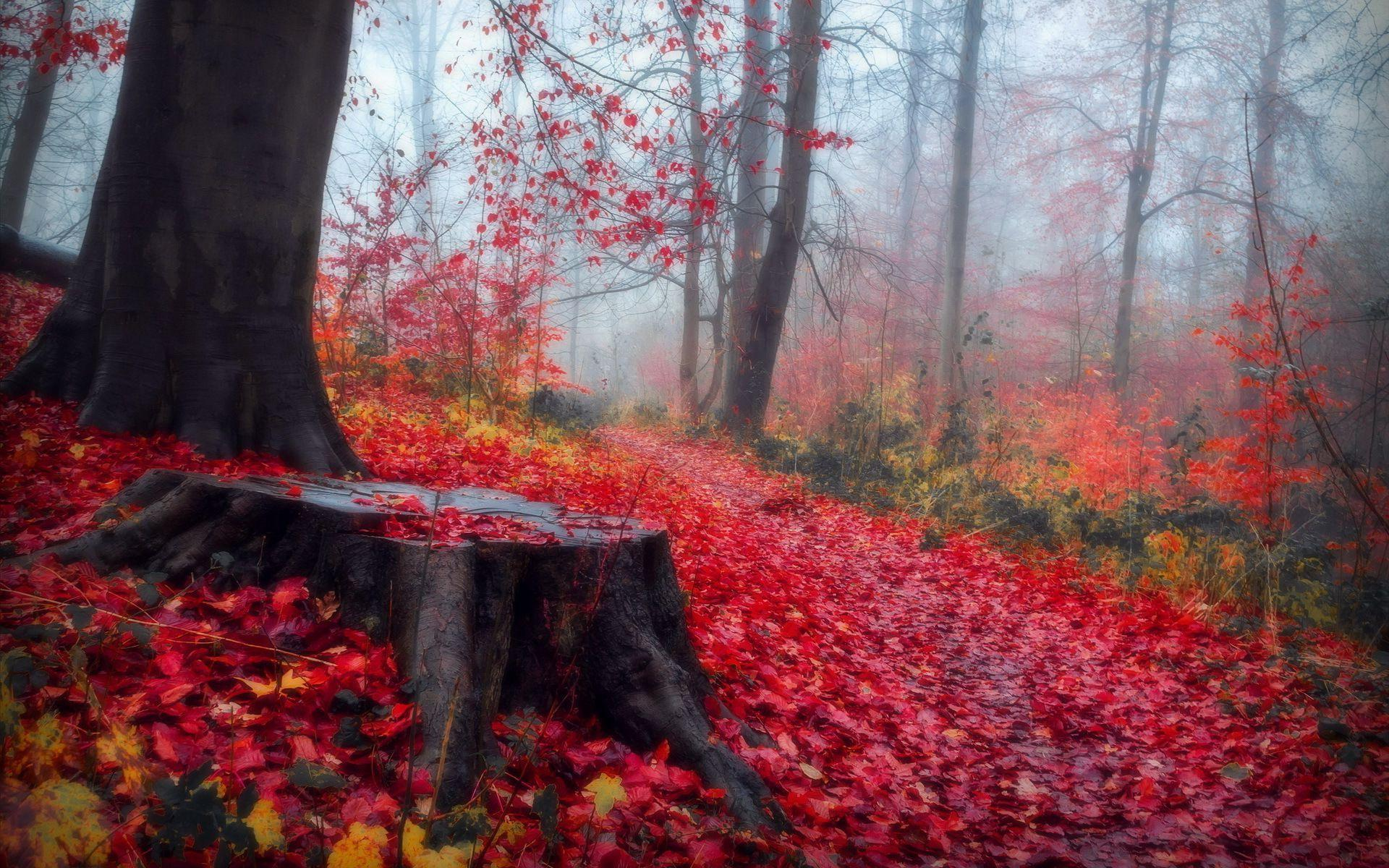 Fall Autumn Computer Wallpaper Hd Red Leaves In The Autumn Forest Wallpaper Download