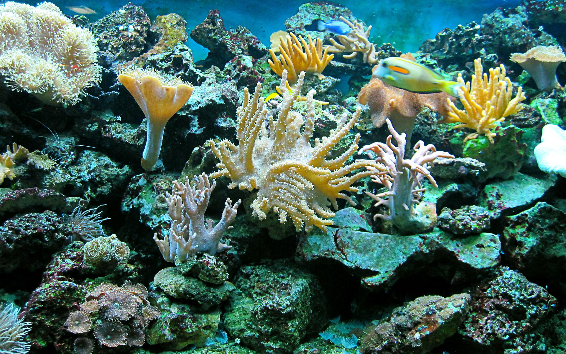 3d Animated Fish Wallpaper Hd Sea Underwater Ocean Reef Fish Widescreen Wallpaper