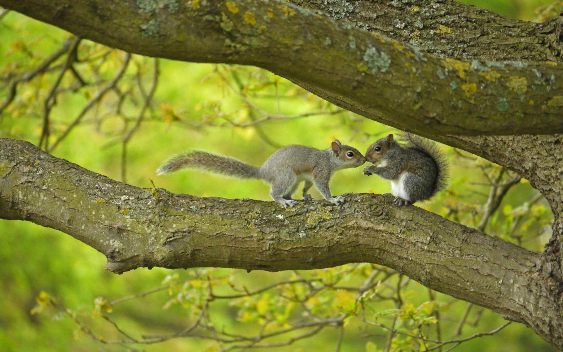 Animated Happy New Year D Hd Squirrels Kissing In The Tree Wallpaper Download Free