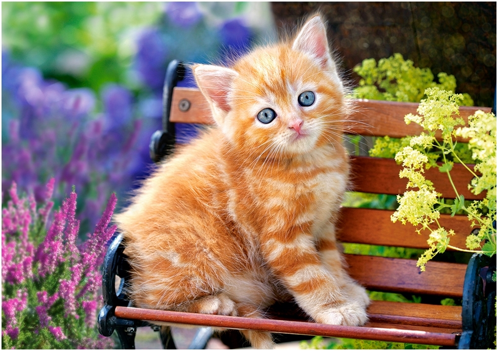 Cute Cats And Kittens Wallpaper Hd Cat Themes Puzzle Ginger Kitten Castorland 52240 500 Pieces Jigsaw
