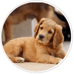 pet owners list, pet owner mailing list, pet owners database