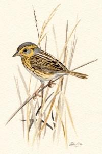 Sparrows Art