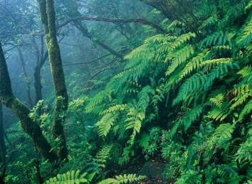 Posetit-lesa-monteverde-.-Tenerife
