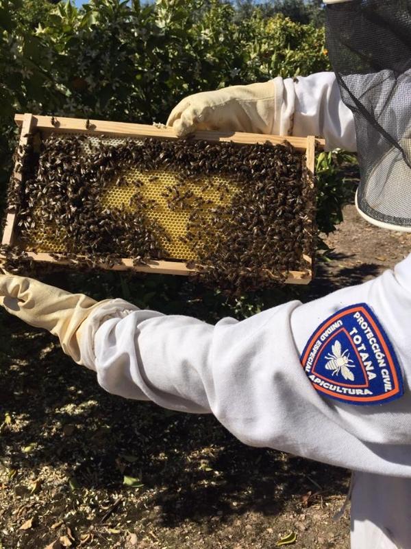 La Unidad de Apicultura de Protección Civil activa el dispositivo de recogida de enjambres de abejas en el municipio coincidiendo con la floración primaveral