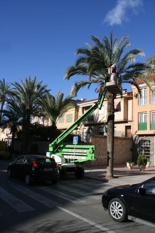 Realizan labores de poda y mantenimiento de la población de palmeras en la vía pública, y parques y jardines del municipio
