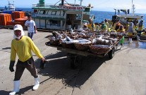 Hired CPAs Relevance to Davao Fishing Industry