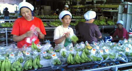 Workers at FBAC's Packing Plant 98 (davaotoday.com photo by Barry Ohaylan)