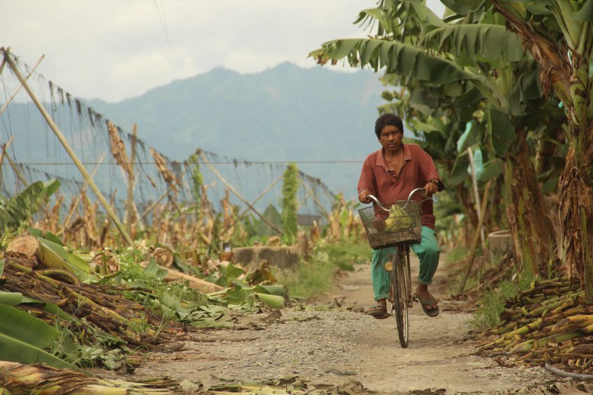 Despite the recent violence that happened inside the banana plantation reclaimed by members of the Madaum Agrarian Reform Beneficiaries Association, Inc. in Madaum, Tagum City, Davao del Norte, a farmer bike his way going around the plantation. At least nine protesters were injured after two incidents of attack against the farmers group on December 12 and December 14, 2016. (Earl O. Condeza/davaotoday.com)