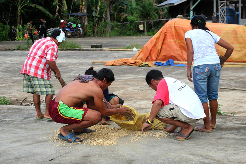 FARMERS. Farmers hastily put away their grain to keep them from being wet moments after a slight drizzle started to pour in Barangay Makopa, Laak, Compostela Valley on Tuesday, Jan. 10. (Paulo C. Rizal/davaotoday.com)