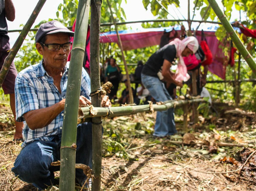 Farmers reclaim land from Lapanday after decades
