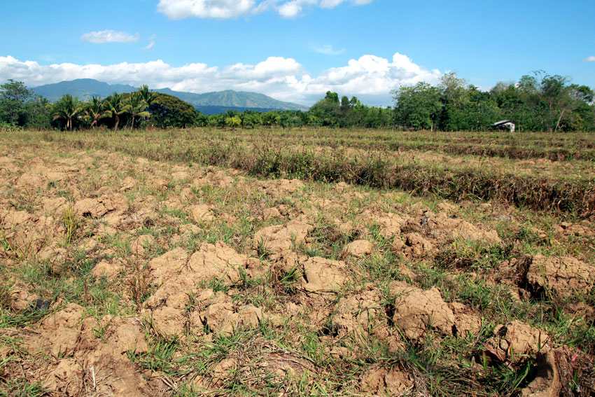 Dry spell destroys PHP4.35-B worth of crops in PH