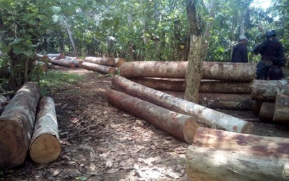 Illegal logging continues in Caraga during pandemic