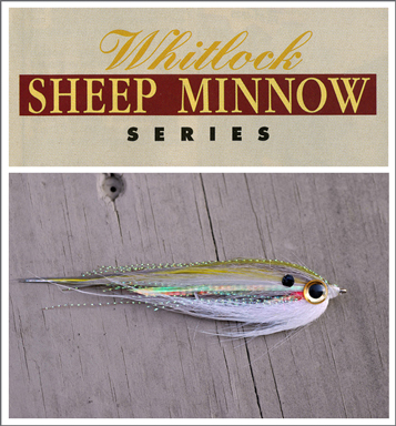 Sheep Minnow Tying Series