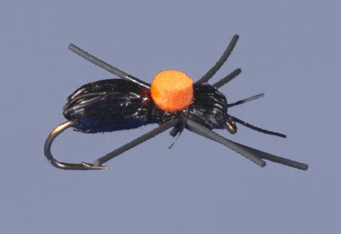 whitlocks-bright-spot-carpenter-ant