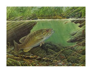 Creek-Smallmouth