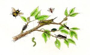 Streamside-bugs