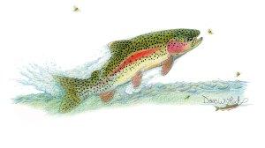 Rainbow-&-Caddis-WEB