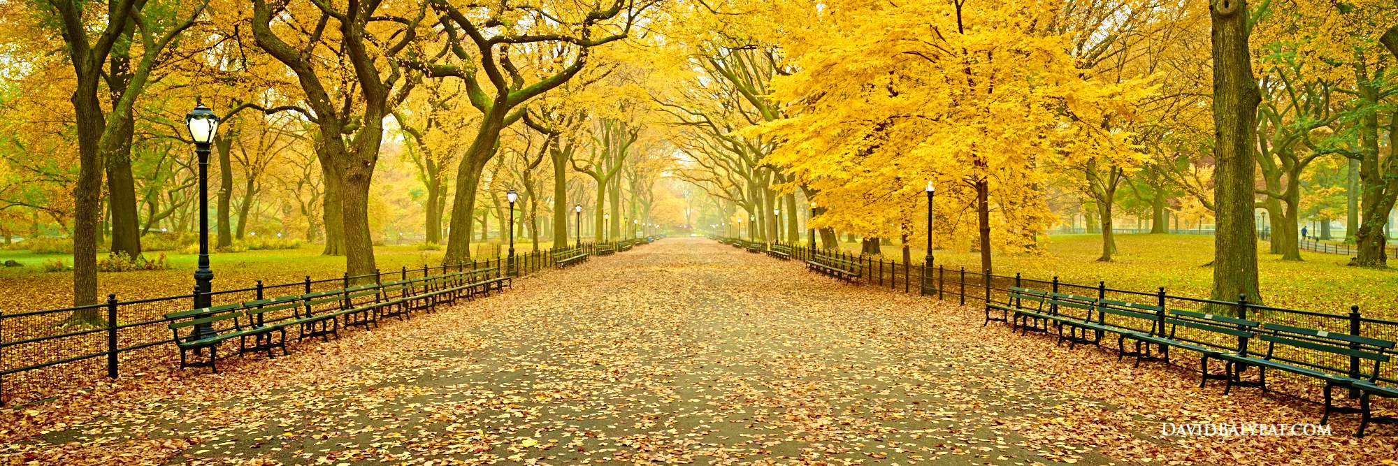Fall Tree And Black Fence Wallpaper A Walk In The Park Central Park David Balyeat