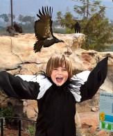 Condor Boy at the Santa Barbara Zoo 5/15/09